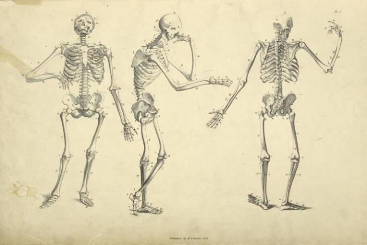 huber 3 skeletons nyp