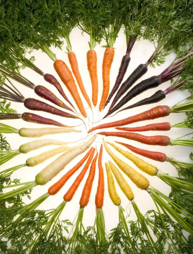 Carrots_of_many_colors (2)
