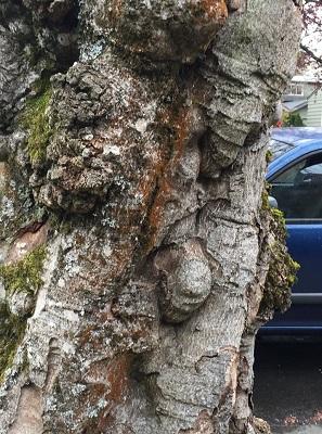35. Tree trunk1