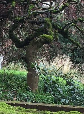 36. Tree trunk2