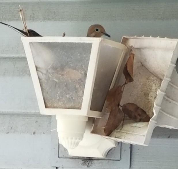 diaz bird