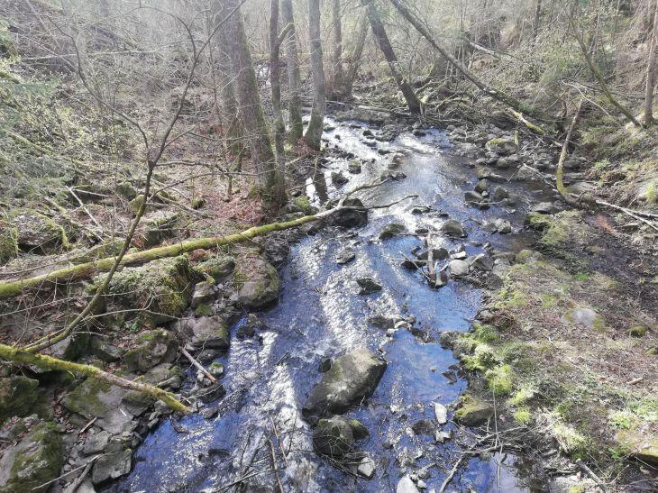 bogu stream