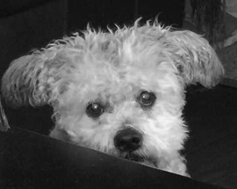 Bailey Begging 2